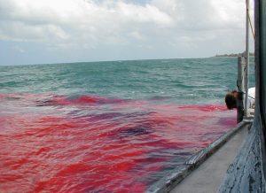 Ocean Surveys - Dye Tracer Studies