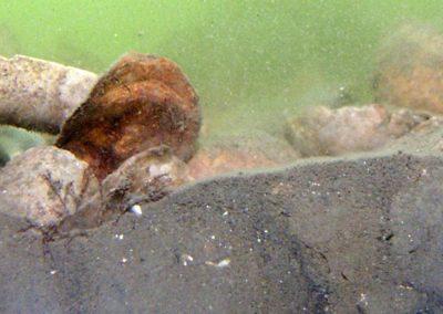 Sediment Profile Imaging (SPI)