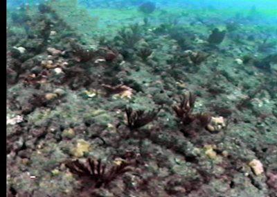 Ocean Outfall Fig. 2